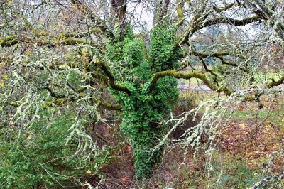 Monster Tree