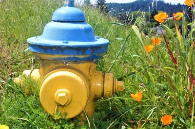 Vibrant Hydrant
