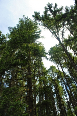More Than 21 Trees